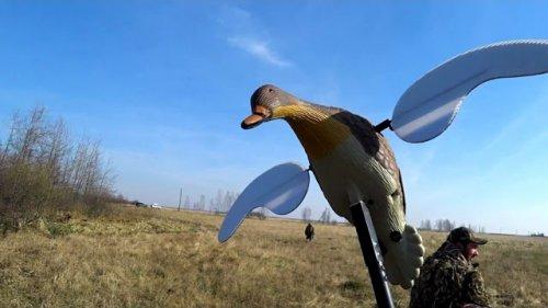 Охота 2019г. Селезни летели как сумасшедший. Часть вторая. The drakes flew like crazy. Hunting