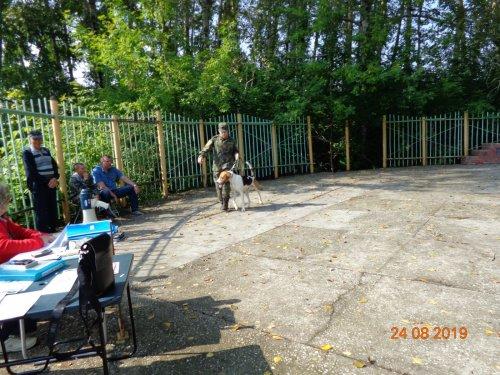 Тогучинская выставка охотничьих собак.