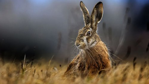 Удивленные зайцы… По которым никто не стреляет