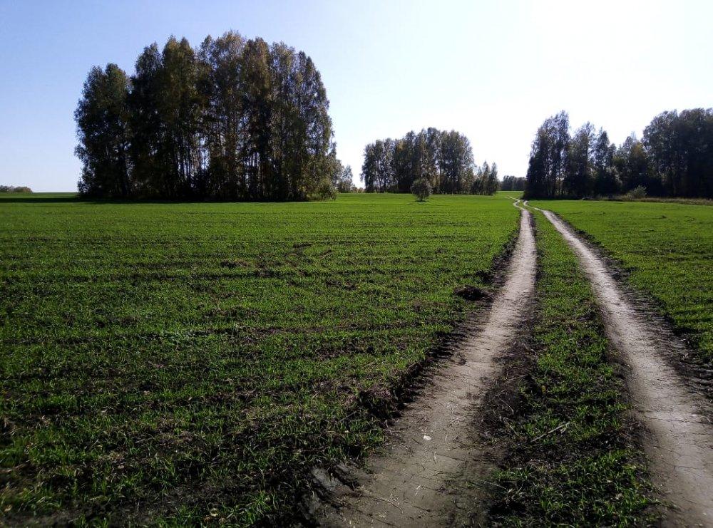 Зелень осенних полей...