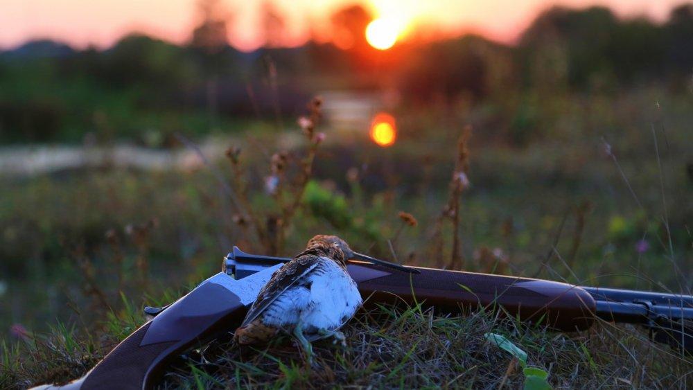 На закате, Белгородская область