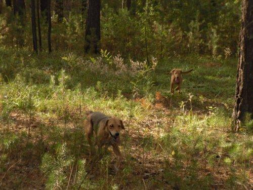 Первая в жизни прогулка с мамой по лесу. Юла 3,5 мес.