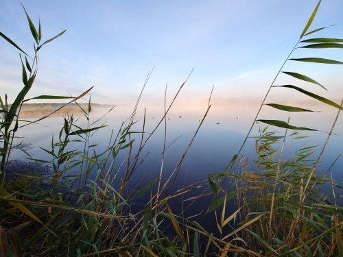 Утрянка в тумане