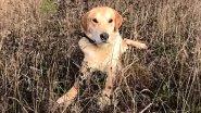 Делаем из гончей рабочую собаку: все тонкости и секреты