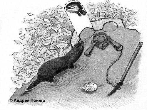 Капканная ловля пушных зверей в искусственных норах