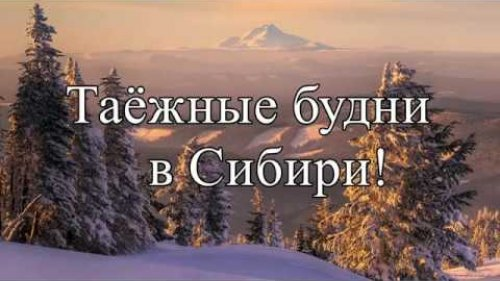 Таёжные будни в Сибири!