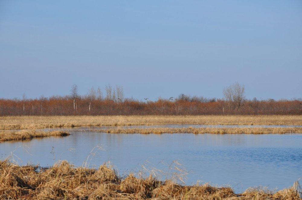 Природа севере Республики Коми.