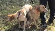 Экскурс от экспертов по собакам охотничьих пород, начинающим охотникам смотреть обязательно!