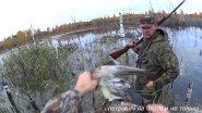 На утку: охота одного подъема и работа собаки. Часть 1