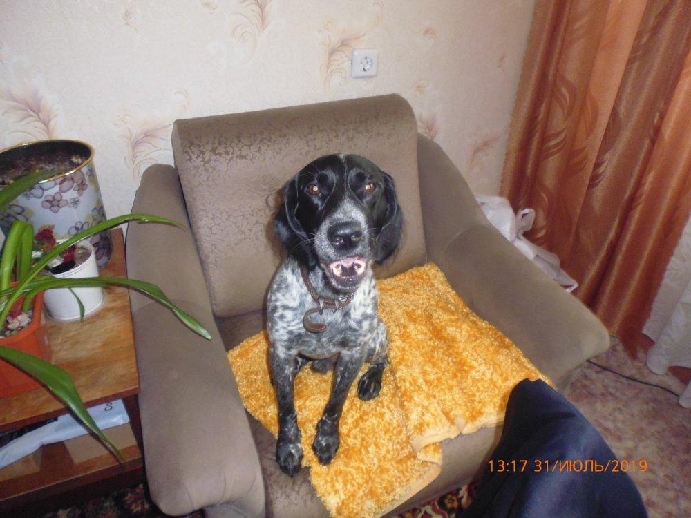 Моя собака Бим