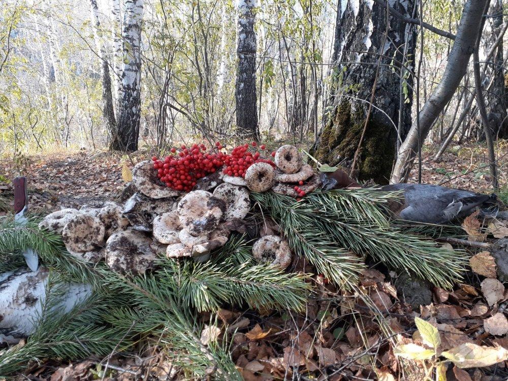 Лесные радости, тёплого октября...!