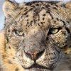 Наказание за незаконную охоту на краснокнижных животных ужесточат