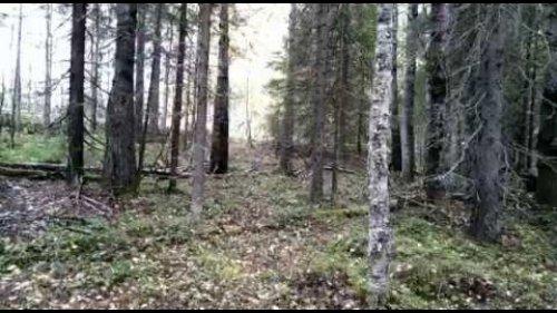 Осенний медведь 2 часть. Взяли!!!!