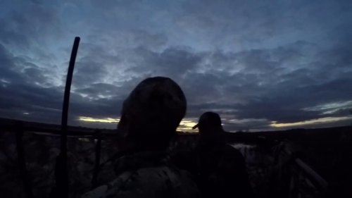 Тизер к фильму «Shot Duck Gear Стрелянный селезень»