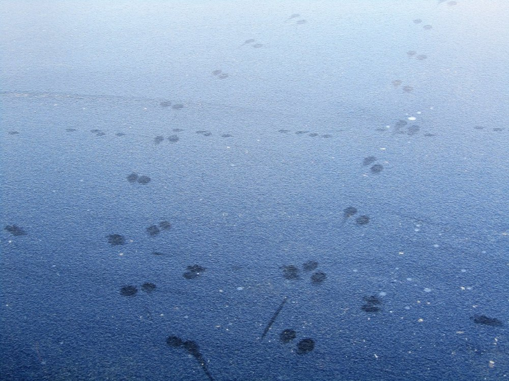 Следы на льду.