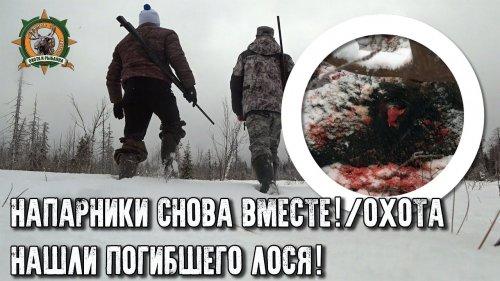 Напарники снова вместе/Нашли мертвого лося/Три дня в тайге
