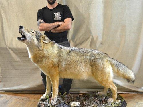 """Закончена очередная работа """"Волк воющий"""""""