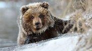 Один из способов защиты от медведя