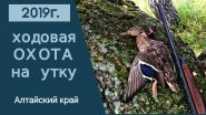 Ходовая охота на утку 2019