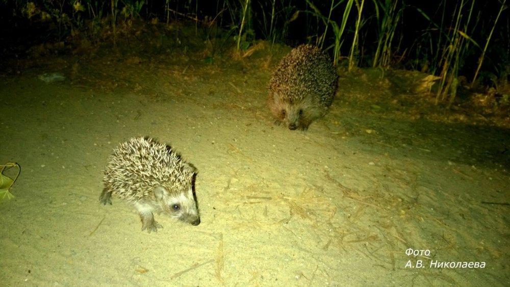 Ночные жители леса