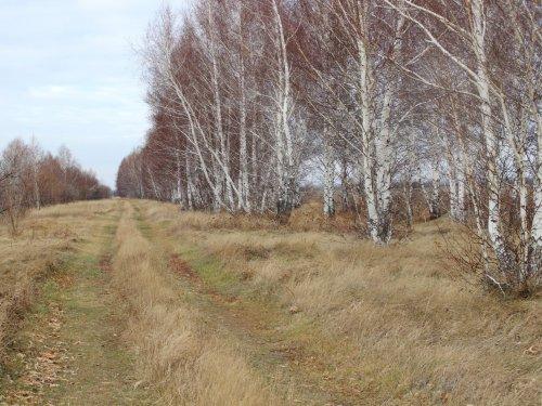 Дорога на охоту.