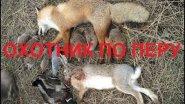 Охота, Зайцы,Лисы,Утки,Куропатки (Hunting, Hares, Foxes, Ducks, Partridges)