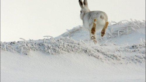Охота на зайца, лучшие моменты, нарезка выстрелы