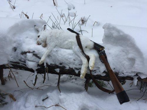 Охотил Рябого, а открылся по зайке)