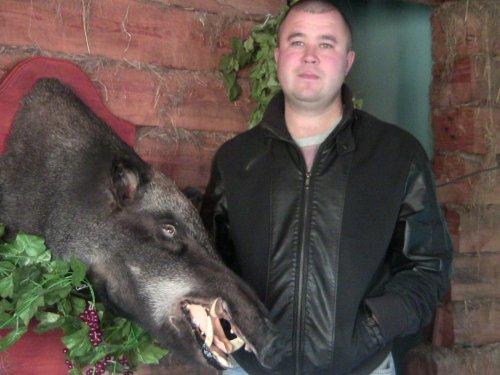 Секач,добытый в Забайкальском крае в 2014 г