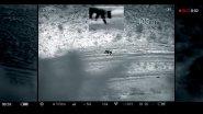 Охота на волка в Дагестане. Выстрел по волку с отвесной скалы.  Волк на дне ущелья