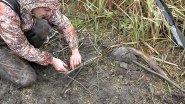 Охота на бобра капканами. Проходные капканы, их постановка и проверка