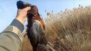 Охота на фазана. Шакал. Утка пеганка. 15 ноября 2019 г.