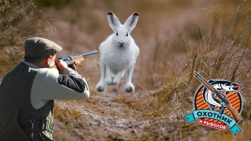 Охота на зайца 2020 Часть 2