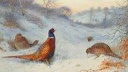 Охота на фазана. Закрытие 31 декабря 2019 г. Горы охотхозяйство