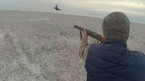 Охота на фазана и зайца по свежему снегу. 15 Декабря 2019 г.