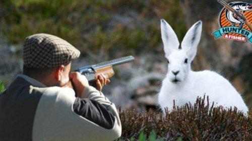Охота на зайца 2020