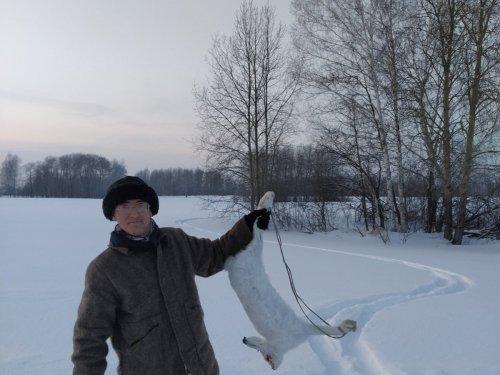 Есть еще зайцы в Томской области!