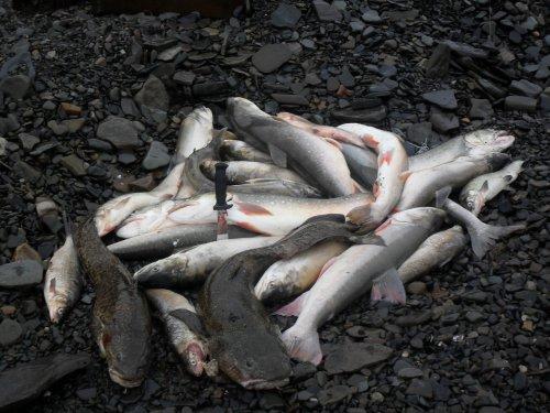 рыбалка,  Таймыр