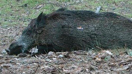 Каждый охотник должен знать МИФЫ про охоту с блочным луком и арбалетом!