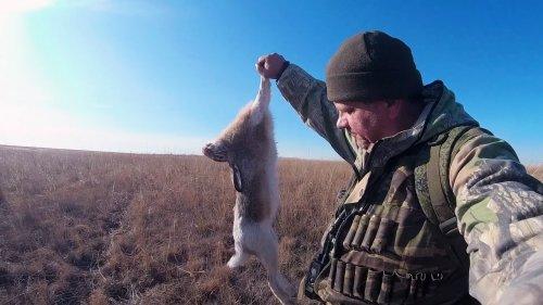 Открытие охоты на зайца. МИНЗДРАВ предупреждает...