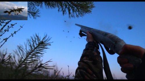 "Охота на гусей ""Дробь №5"", анализ ранений (goose hunting)"