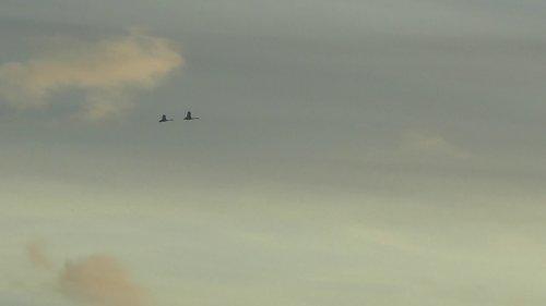 Лебеди на Рузе в середине февраля