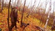 Коллективная охота на рябчика
