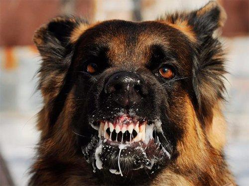 Болезнь – животных и людей. Что нужно знать о бешенстве