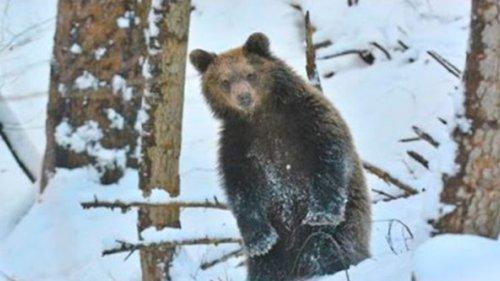 Лесник встретил в лесу  медведицу с медвежатами