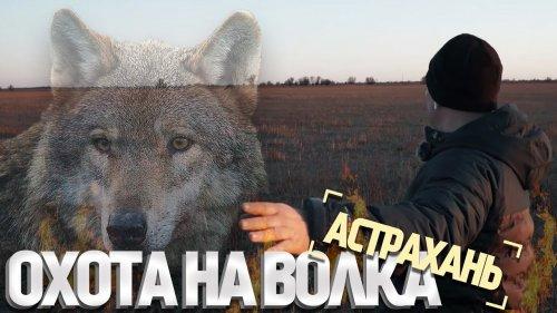 Охота на волка в дельте Волги. Волки разорвали 9 лошадей!
