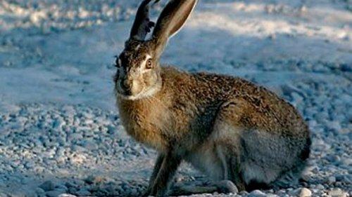 Охота на зайца. Закрытие сезона на новых местах