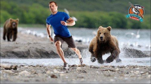 Встретил медведя, готовься к смерти! Как выжить?