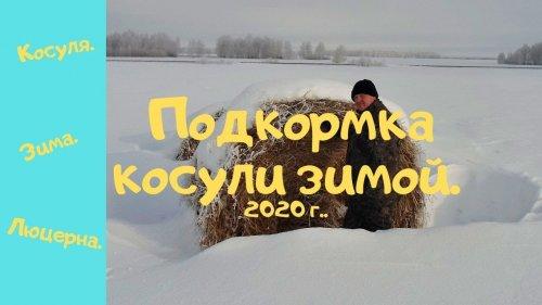 Подкормка косули зимой  2020 г