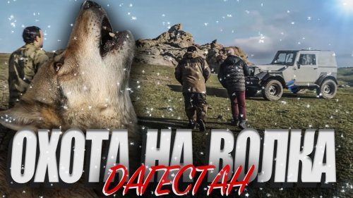 Охота на волка в Дагестане. Выстрел на 240 метров. Попадание в кадре.